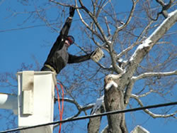 Residential Tree Removal
